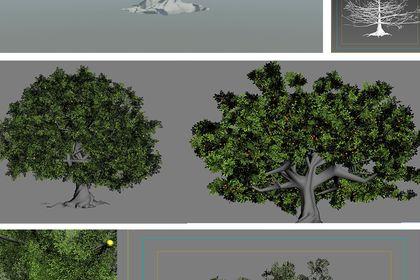 Tropicana, Tree of giving