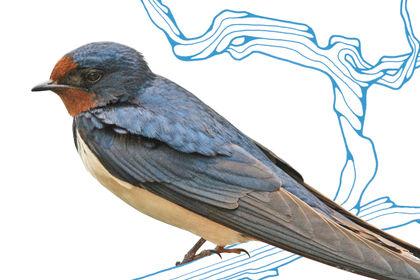 Les Oiseaux (triptyque d'affiches)