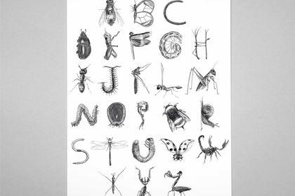 Alphabet insectes