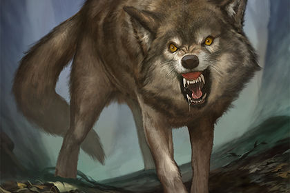 Illustration fantasy : Loup
