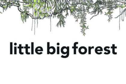 Little big forest