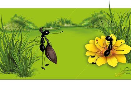 Projet les fourmis