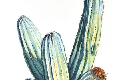 Illustration cactur