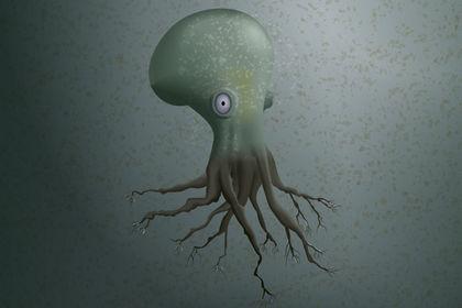 Octopousses