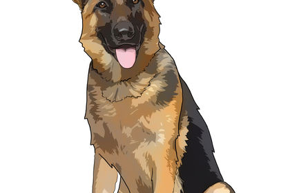 Illustrations chien