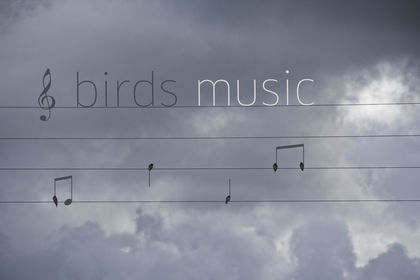 Birds Music