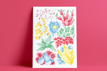 Illustration - Plantes grasses et cactus