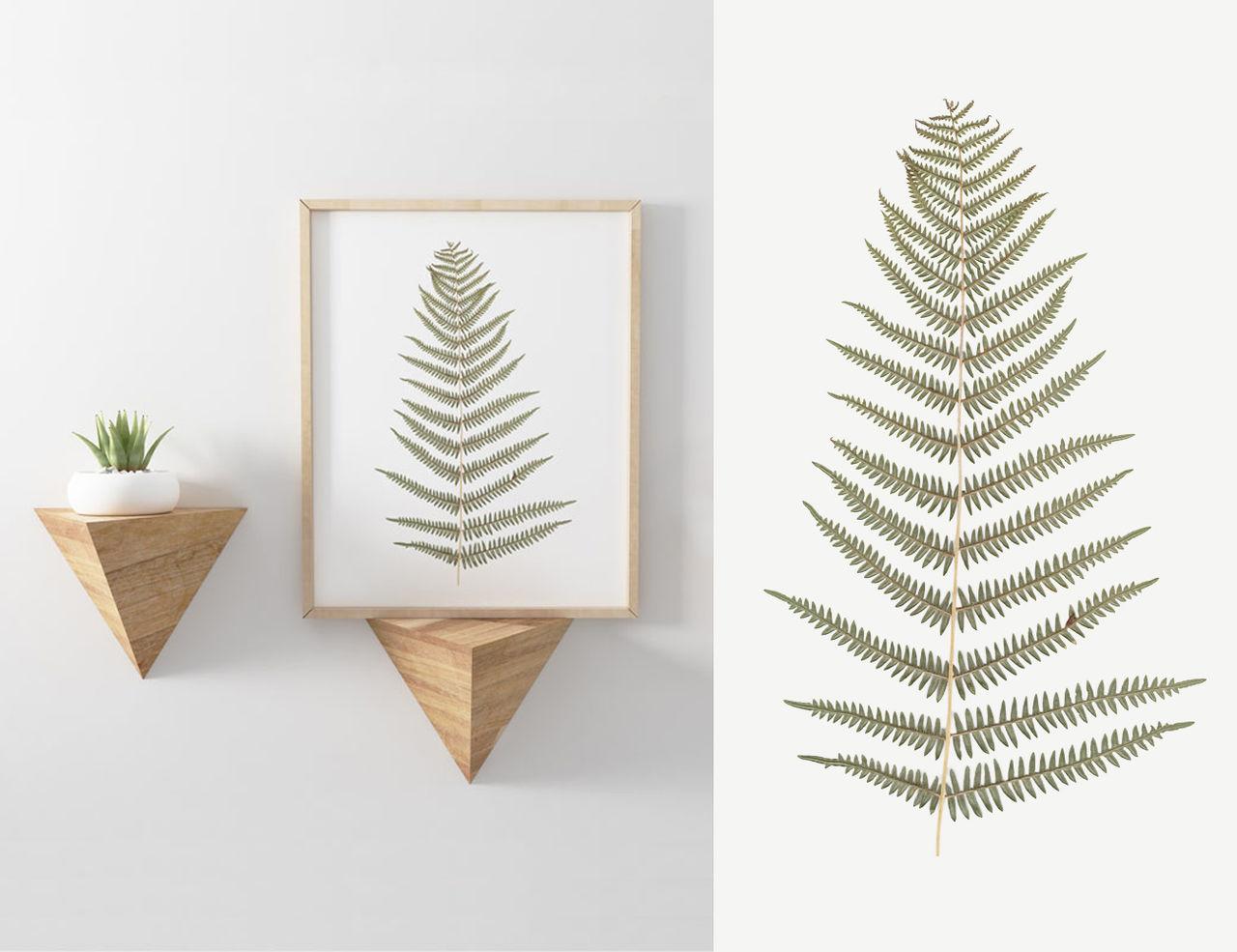 Illustrations & Images : Herbier Fougères