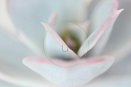 """Photographie """"Nature et Plantes"""" : Succulente"""