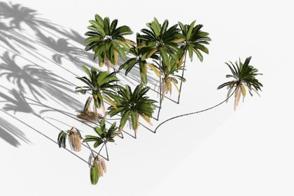 3D coconut trees