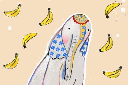 Illustration éléphant