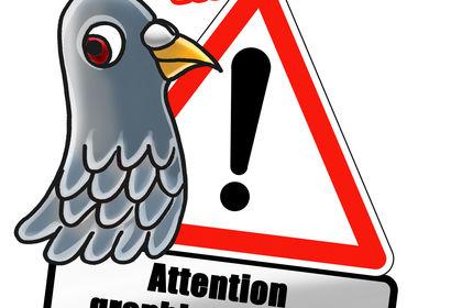 Attention pigeon