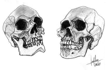 Dessin crânes humains
