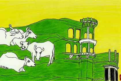 Varanasi's buffalos