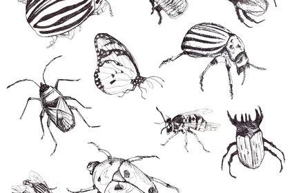 Illustration d'insectes
