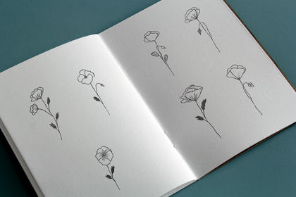 Illustrations - le coquelicot