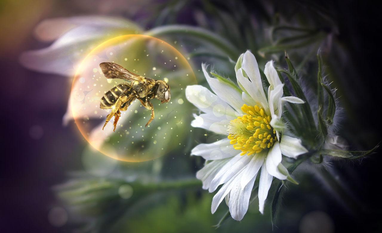 Montage - Abeille/bulle/fleur