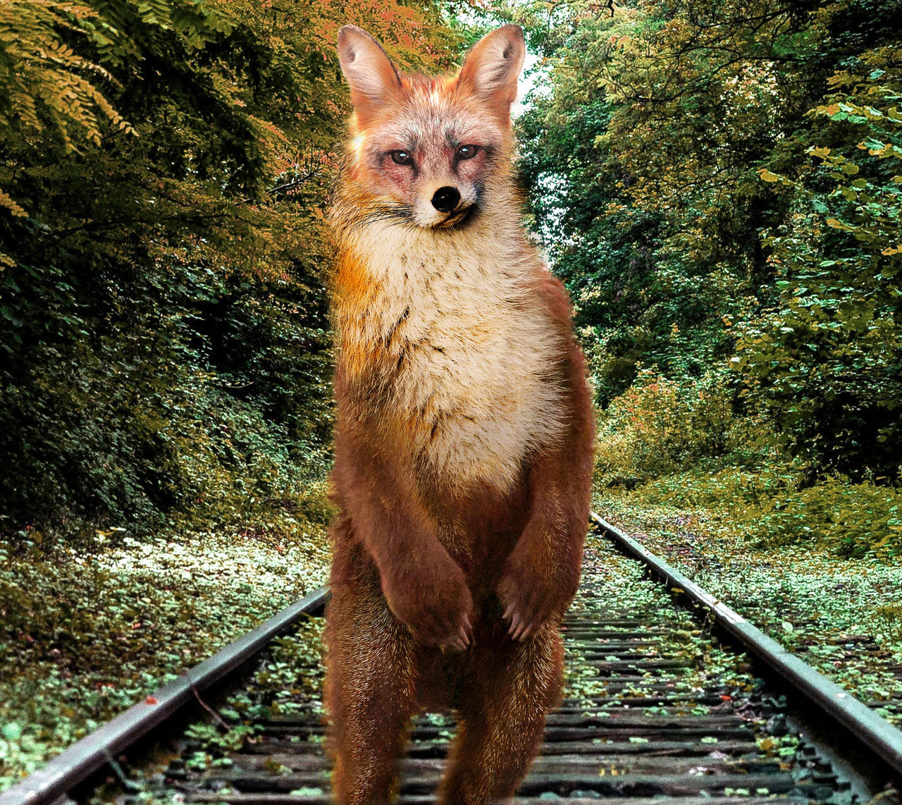 Ours Renard