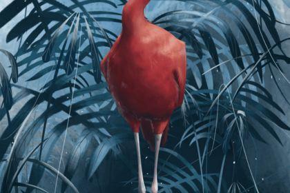 Digital painting d'un oiseau / ibis