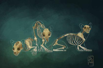 L'envers du décors / Anatomie Art