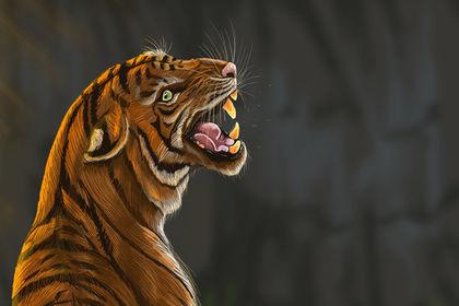 Tigre - Rough