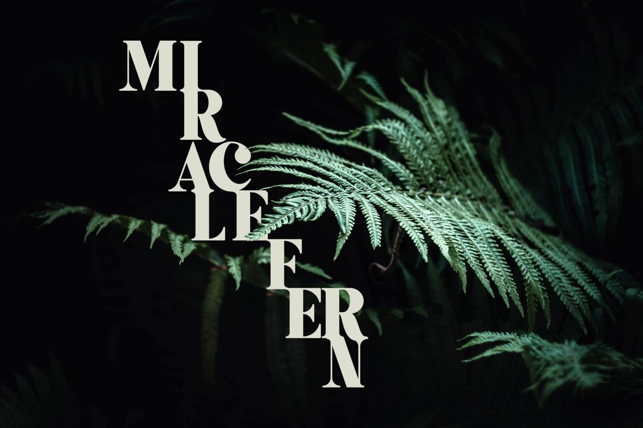 MiracleFern pour Garden Series
