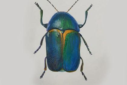 Mon premier insecte