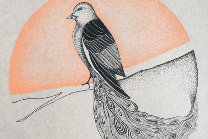 Illustration oiseau hybride