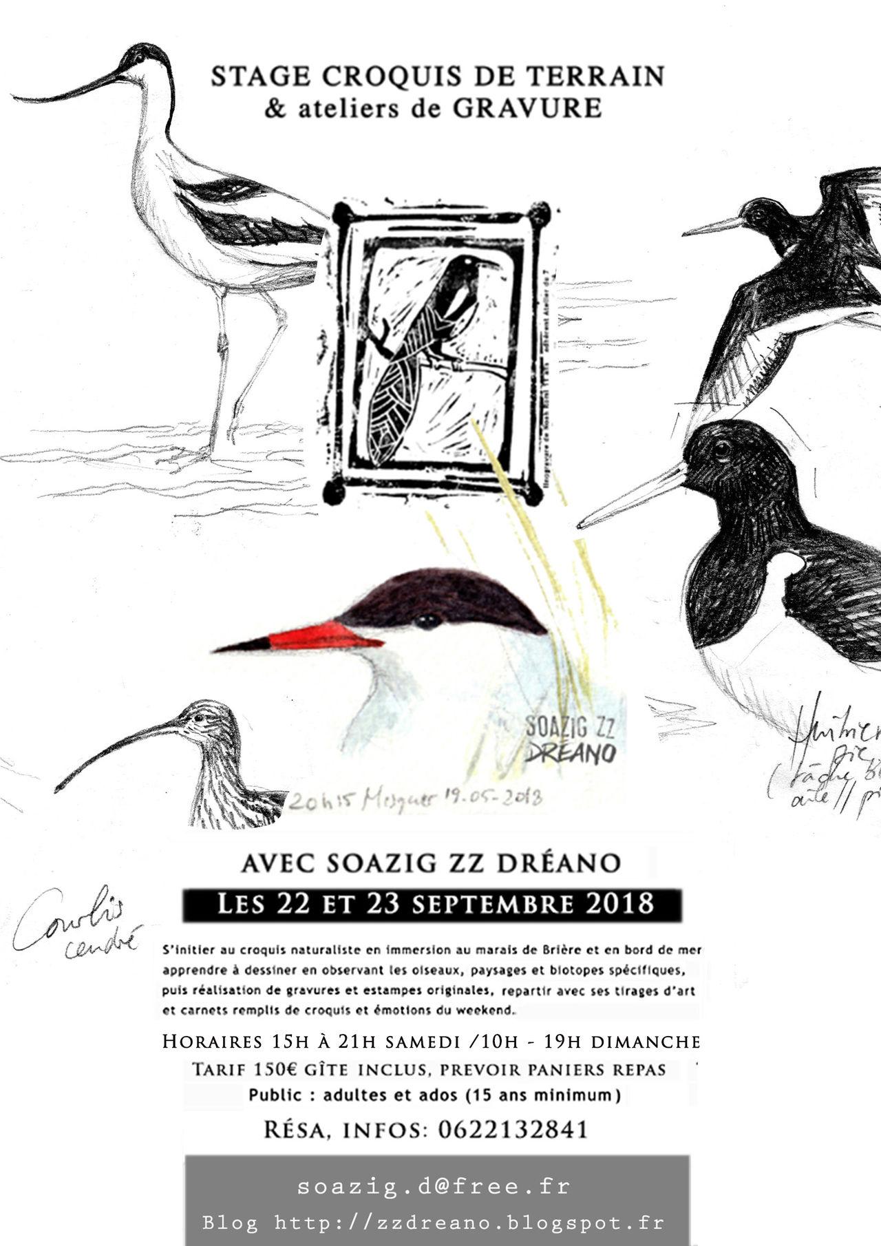 #209571 Fly stage dessin naturaliste et gravure