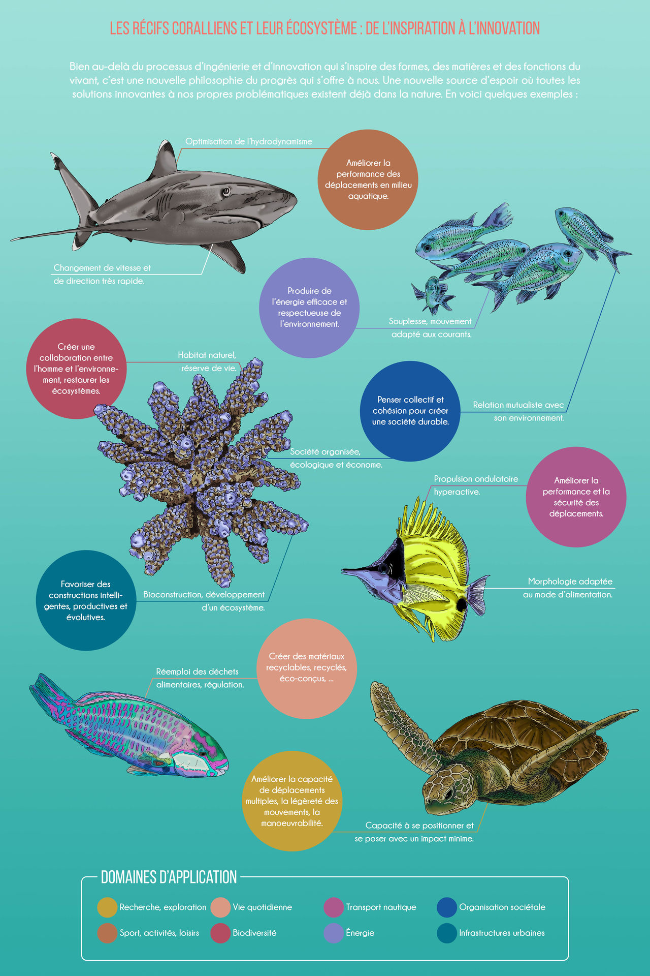 Affiche Institut Polynésien de Biomimétisme #2