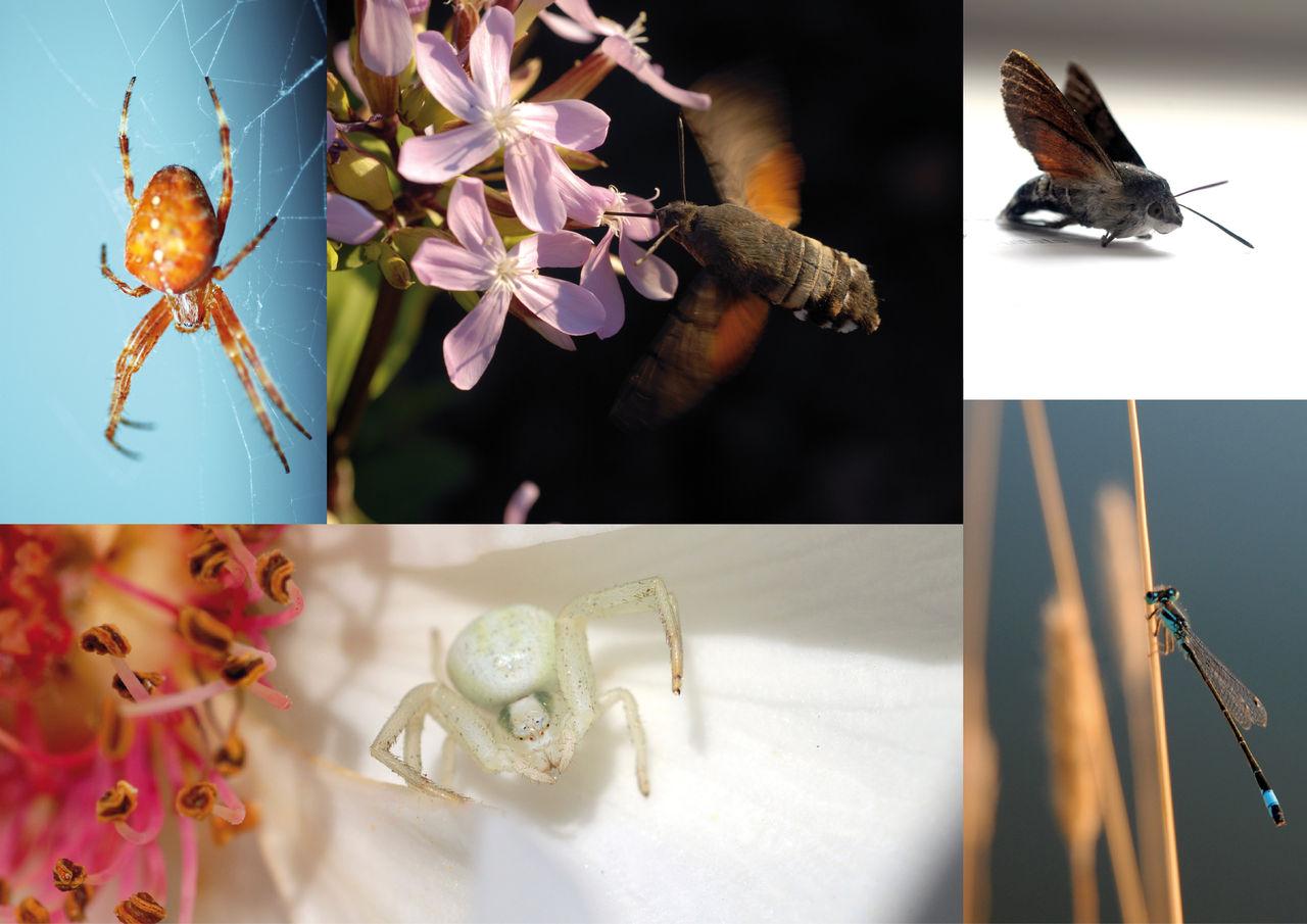 Photos insectes