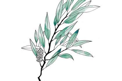 Illustration Tea Tree