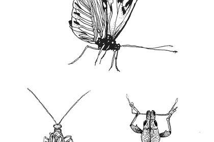 Illustration insectes