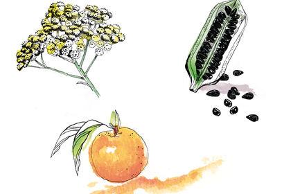 Illustration au trait et aquarelle