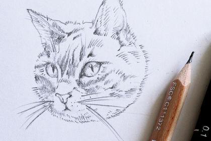 Illustration crayonné de chat