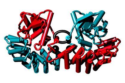 3D Protéine (CNRS)