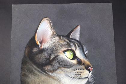 Portrait animalier au Pastel
