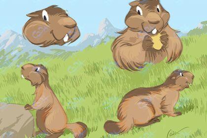 Croquis de marmottes