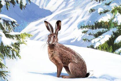 Lièvre dans la neige