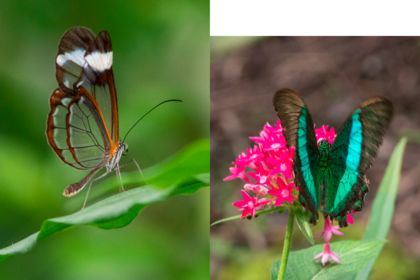 PHOTOGRAPHIE (PAPILLONS)