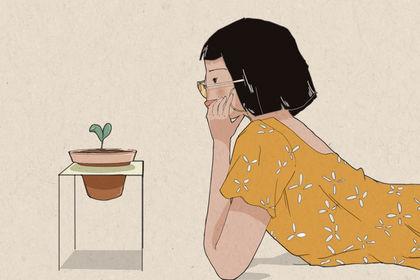 Serie d'illustration autour du végétal