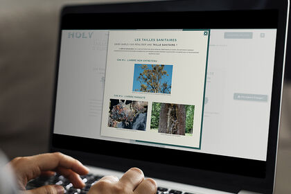 Web design et développement web