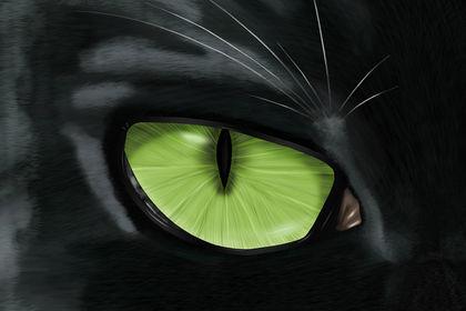 Digital Painting Œil de chat