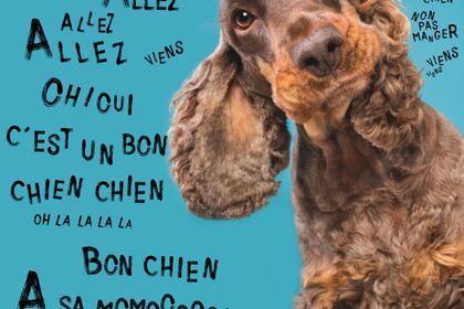 Bon-chien-chein