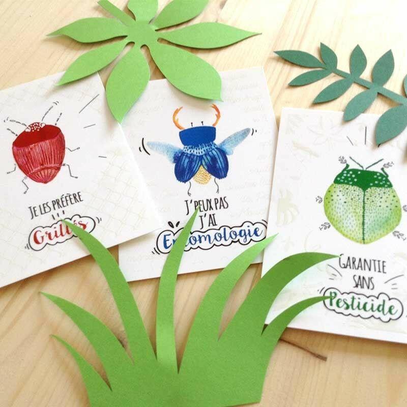 """Cartes postales """"Insectes"""""""