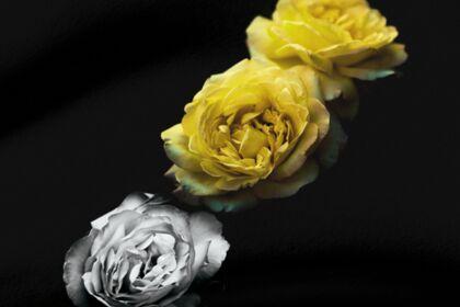 La symbolique Florale   DIGITAL & PRINT