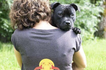 Logo élevage canin