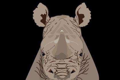 Rhinocéros (illustration livre enfant)